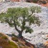 Foto di un albero nel parco delle Biancane