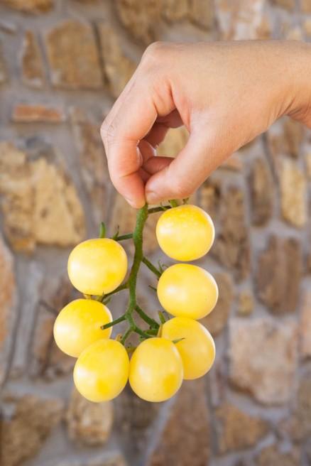 Foto di pomodori White Cherry
