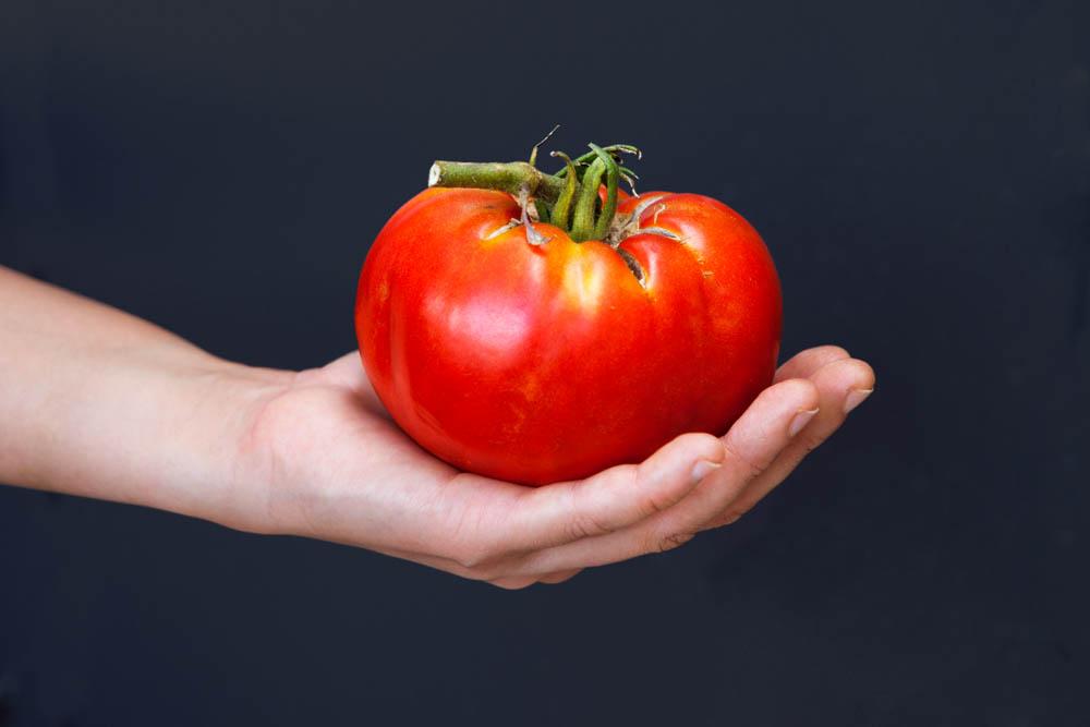 Foto di un pomodoro Piombino