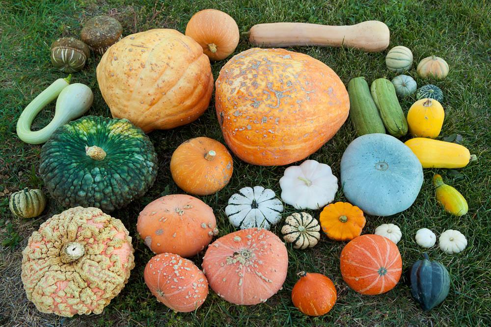Foto di diverse varietà di zucca