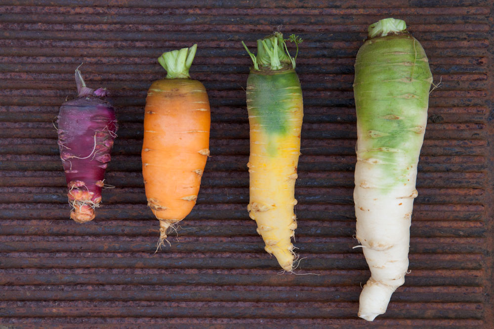 Foto di carote colorate.