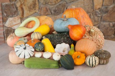 Foto di numerose varietà di zucche